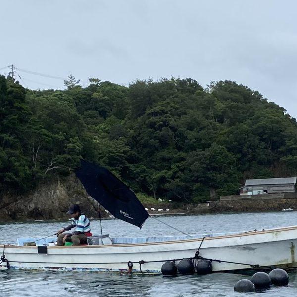 こだま渡船 カセ釣り釣果 2021/8/13
